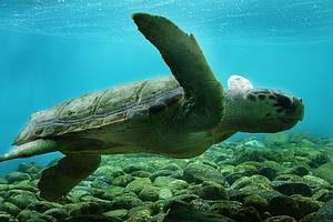 Ilha de Anchieta: Tartarugas marinhas estão entre as atrações - Foto: Juliana Branco - FCVB-SP